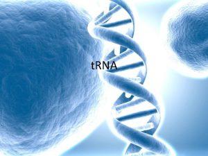 t RNA t RNA Transfer RNA t RNA