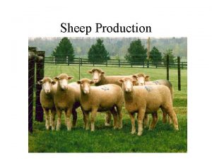 Sheep Production Sheep Production Terms for understanding Ram