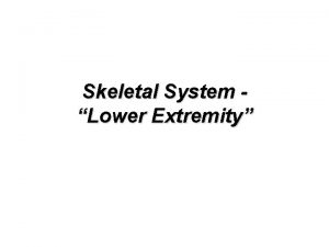 Skeletal System Lower Extremity Appendicular Lower Extremity Total