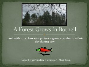 A Forest Grows in Bothell and with it