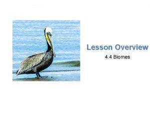 Lesson Overview Biomes Lesson Overview 4 4 Biomes