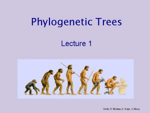 Phylogenetic Trees Lecture 1 Credits N Friedman D