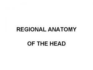 REGIONAL ANATOMY OF THE HEAD CALVARIA Regio frontalis