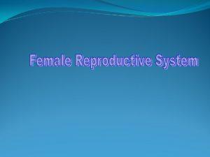 Primary sex organs of the female Female gonad
