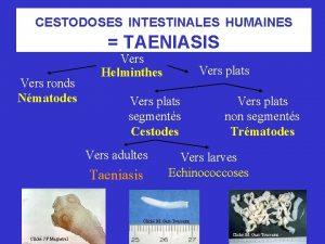 CESTODOSES INTESTINALES HUMAINES TAENIASIS Vers ronds Nmatodes Vers