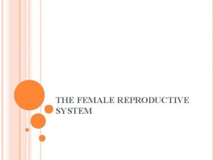 THE FEMALE REPRODUCTIVE SYSTEM FEMALE REPRODUCTION Unlike males