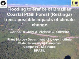 Flooding tolerance of Brazilian Coastal Plain Forest Restinga