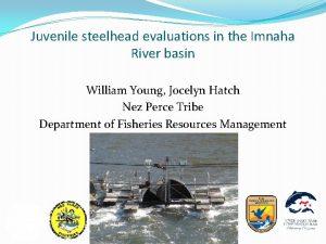 Juvenile steelhead evaluations in the Imnaha River basin