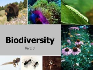 Biodiversity Part 3 Plants Properties that distinguish plants