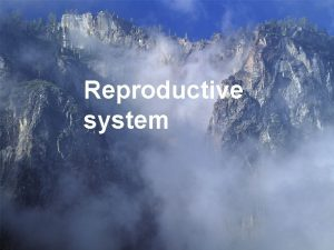 Reproductive system l Male reproductive system l Female