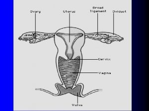 summary ovary produce ovum secret steroid hormones uterine