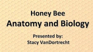 Honey Bee Anatomy and Biology Presented by Stacy