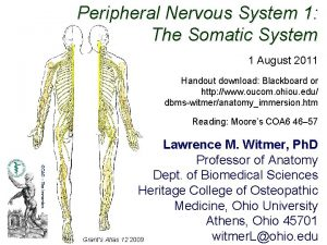 Peripheral Nervous System 1 The Somatic System 1
