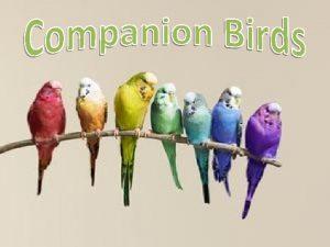 Companion Birds Increasingly popular 16 million pet birds