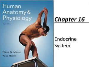 Chapter 16 Endocrine System Endocrine System Overview Acts