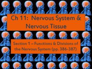 Ch 11 Nervous System Nervous Tissue Section 1