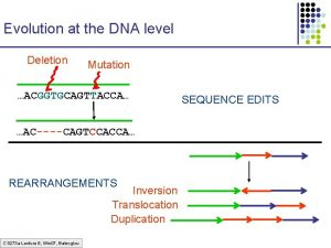 Evolution at the DNA level Deletion Mutation ACGGTGCAGTTACCA