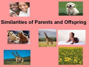 Similarities of Parents and Offspring Similarities of Parents