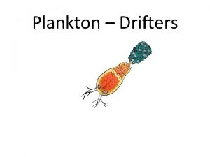 Plankton Drifters Plankton Plant Plankton Phytoplankton Diatoms http