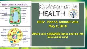 BES Plant Animal Cells May 2 2019 Obtain