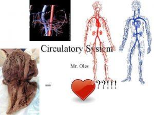 Circulatory System Mr Oles Purpose of the Circulatory