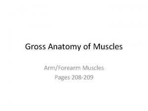 Gross Anatomy of Muscles ArmForearm Muscles Pages 208