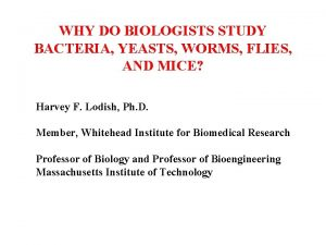 WHY DO BIOLOGISTS STUDY BACTERIA YEASTS WORMS FLIES