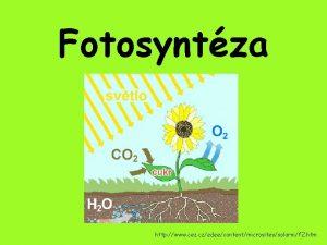Fotosyntza http www cez czedeecontentmicrositessolarnif 2 htm komplexn