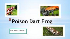 Poison Dart Frog Adaptations Skin Poisonous keeps predators