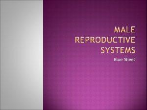 Blue Sheet 1 Male Genitals external A Testes