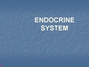 ENDOCRINE SYSTEM 1 2 MORPHOLOGICAL DIFFERENCES EXOCRINE GLANDS
