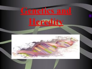 Genetics and Heredity A Heredity q The passing