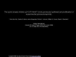 The cyclin kinase inhibitor p 21 CIP 1WAF