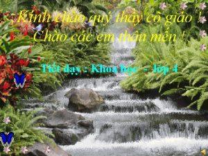 Knh cho qu thy c gio Cho cc