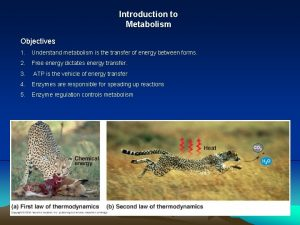 Introduction to Metabolism Objectives 1 Understand metabolism is