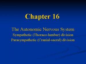 Chapter 16 The Autonomic Nervous System Sympathetic Thoracolumbar