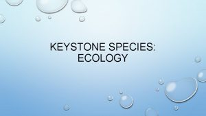 KEYSTONE SPECIES ECOLOGY DEFINITION A SPECIES ON WHICH