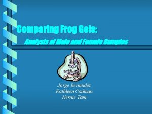 Comparing Frog Gels Analysis of Male and Female