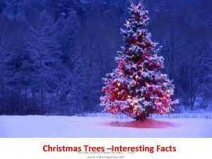 Christmas Trees Interesting Facts For free Science videos