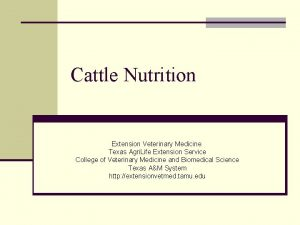 Cattle Nutrition Extension Veterinary Medicine Texas Agri Life