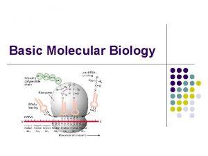 Basic Molecular Biology Basic Molecular Biology l l
