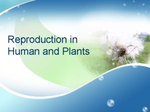 Reproduction in Human and Plants Male Reproductive System