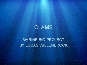 CLAMS MARINE BIO PROJECT BY LUCAS WILLENBROCK CLAM