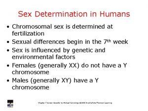Sex Determination in Humans Chromosomal sex is determined