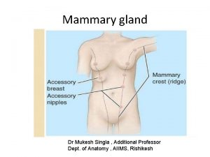 Mammary gland Dr Mukesh Singla Additional Professor Dept