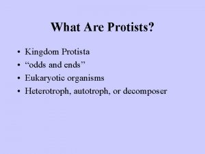 What Are Protists Kingdom Protista odds and ends