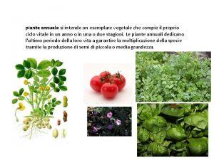 pianta annuale si intende un esemplare vegetale che