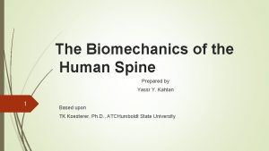 The Biomechanics of the Human Spine Prepared by