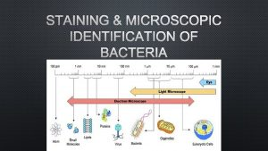 STAINING MICROSCOPIC IDENTIFICATION OF BACTERIA I STAINING A