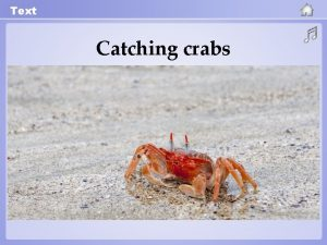 Text Catching crabs Text Catching crabs 1 In